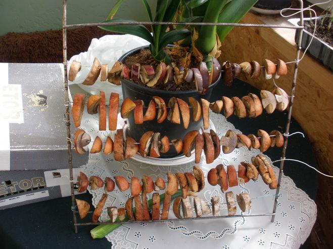 Как хранить сушёные грибы в домашних условиях: советы и