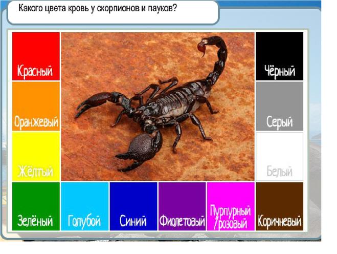 какими бывают мужчины скорпионы