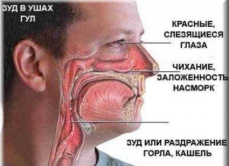 На что бывает аллергия в июле августе