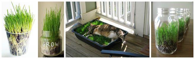 Как выращивать газон в домашних условиях 548