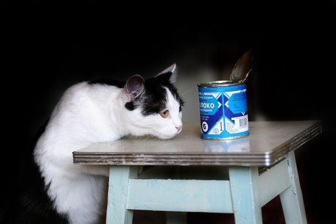 Если дать коту сгущенку