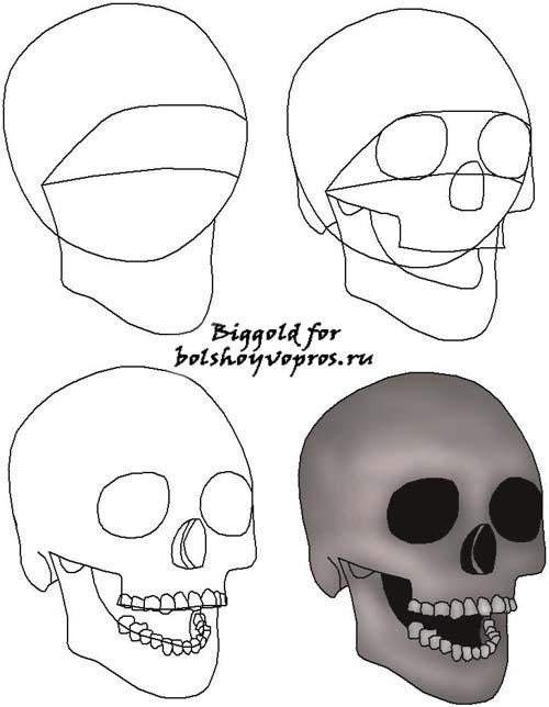 Как легко нарисовать череп поэтапно