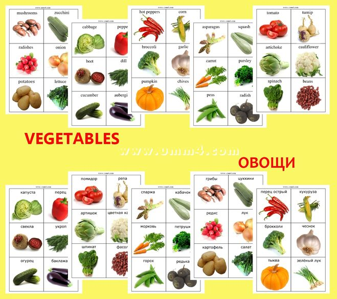 Картинки овощей капуста