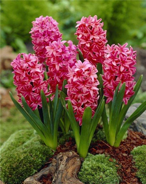 Цветок и похожие на сирень названия