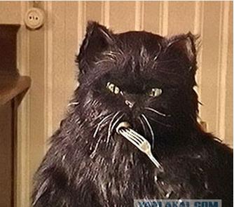Как звали кота из булгакова