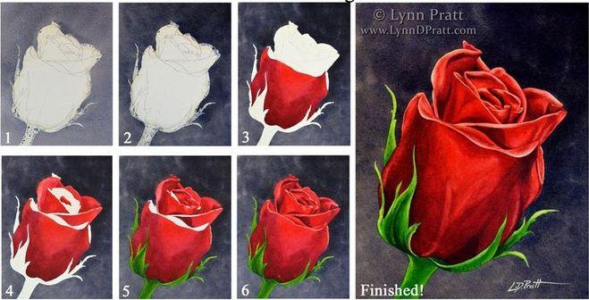 Как нарисовать розу поэтапно карандашом дляей, в вазе