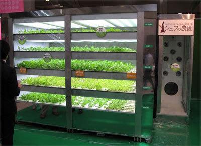 выращивание овощей дома