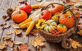 Осенний урожай, технология 1 класс презентация