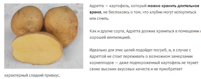 Какой сорт картофеля лучший на зиму