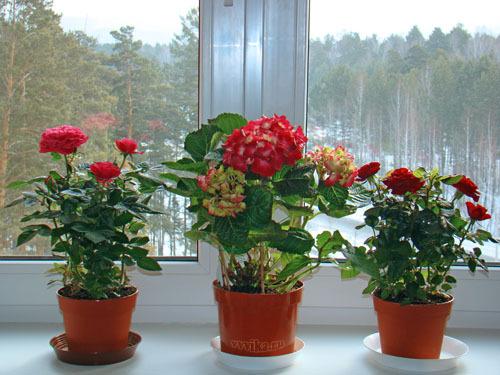 Комнатные цветы на солнечной стороне окна