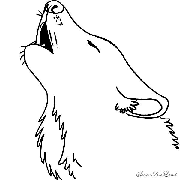 Как нарисовать волка воющего поэтапное