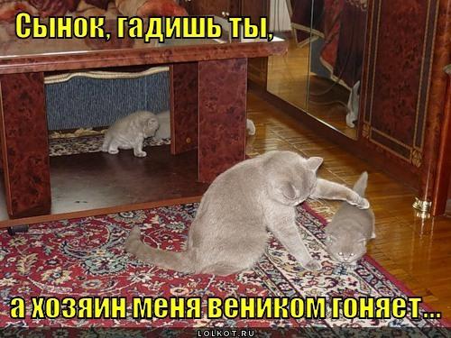 Как сделать чтобы коты не гадили