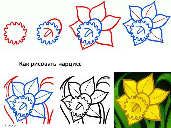 Как нарисовать нарцисс поэтапно для начинающих