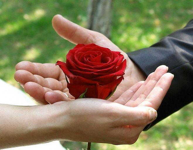 изображение розы