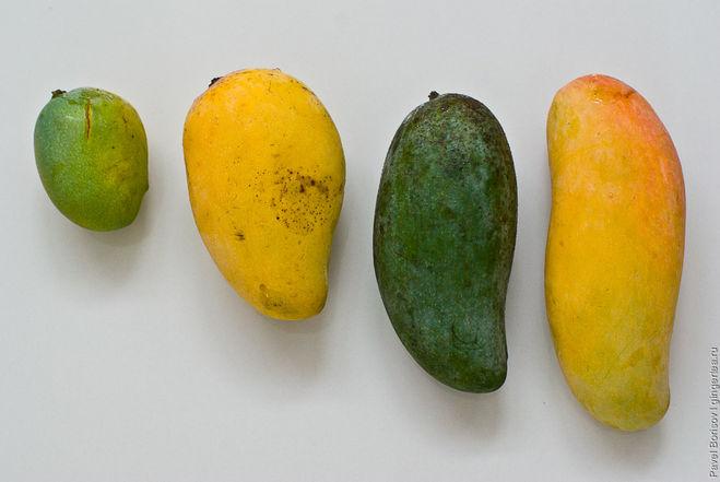Как сделать манго спелыми - Extride.ru