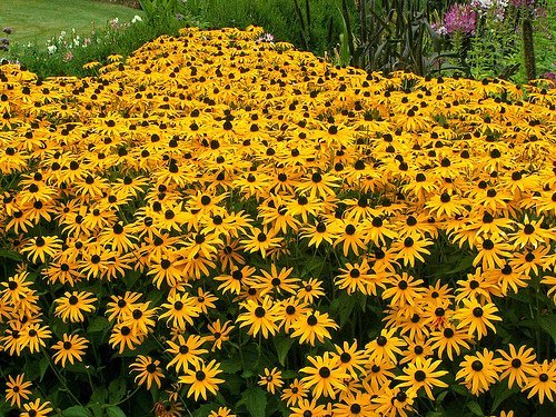 Какие есть цветы, похожие на ромашки ...: www.bolshoyvopros.ru/questions/1036136-kakie-est-cvety-pohozhie-na...