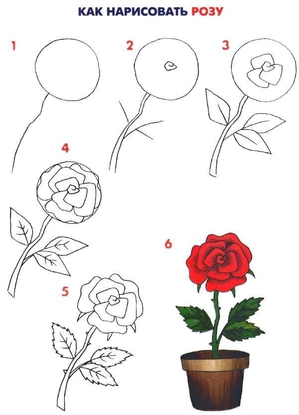 Как рисовать цветов поэтапно