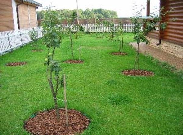 Дизайн своими руками сад и огород 46