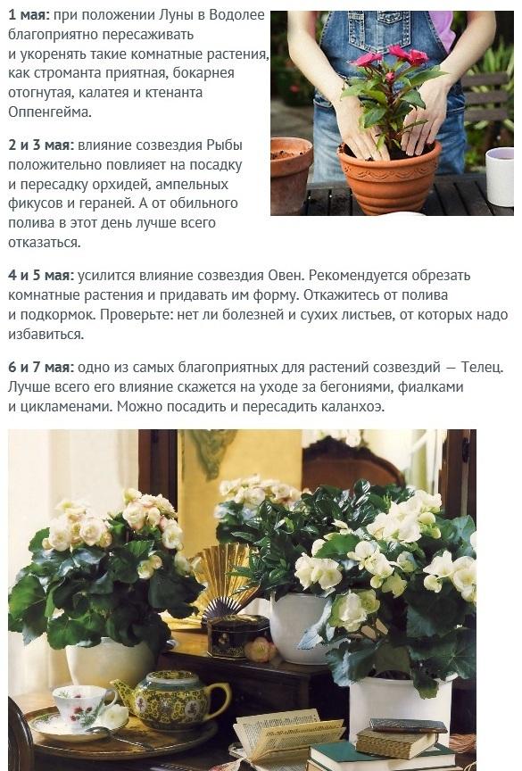 На какую луну сажать комнатные цветы 4