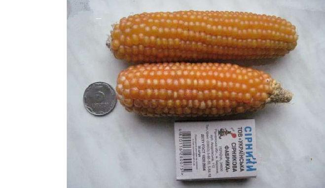 семена кукурузы минор
