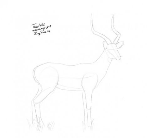 Как нарисовать поэтапно сайгака 3