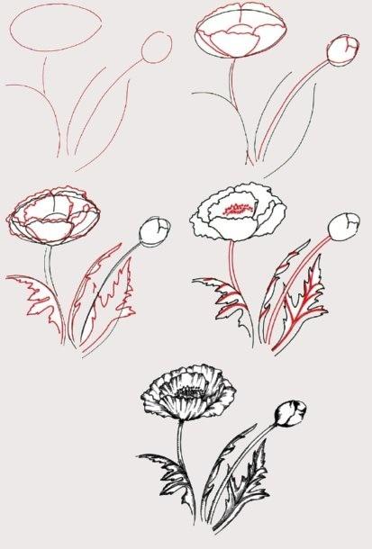 Маки поэтапное рисование