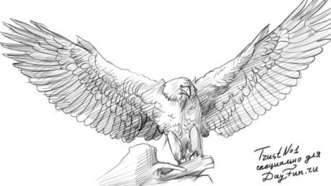 Беркут птица картинки