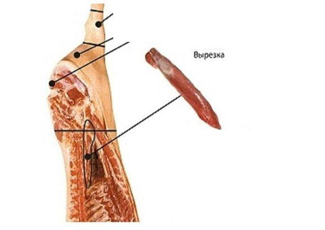 Ленивая мышца где находится