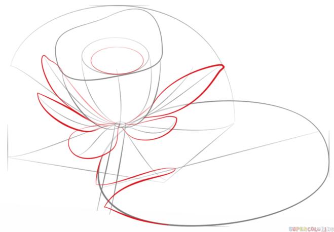 как нарисовать водную лилию 4
