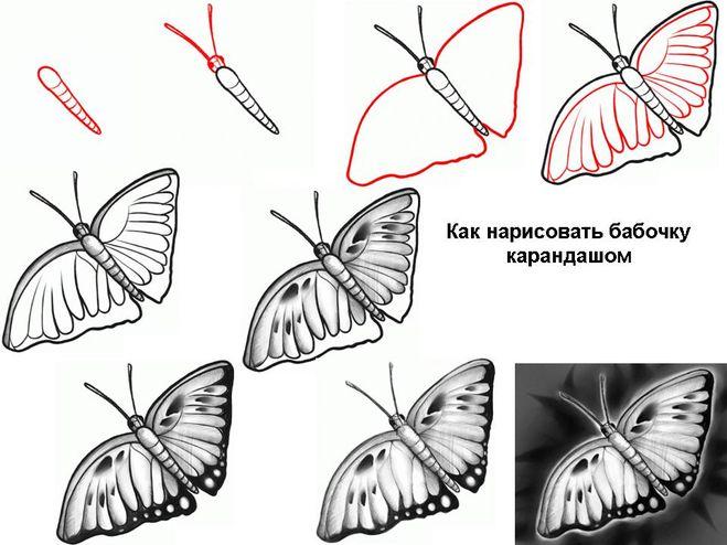 Бабочки как научится рисовать бабочку