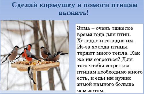 почему необходимо помогать птицам зимой как это правильно делать