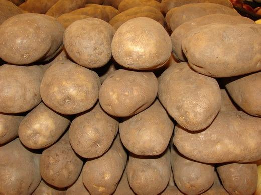 the humble beginnings of the irish potato