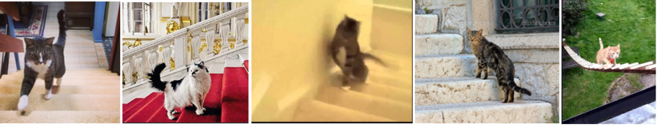 кот, поднимающийся по лестнице