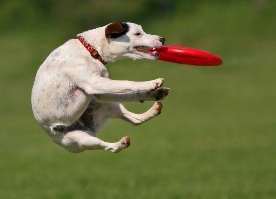 купить фризби диск для собак