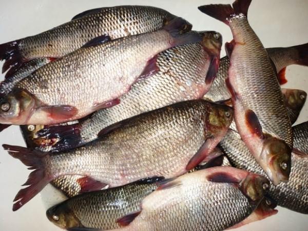 Почему в Оби рыба заражена?