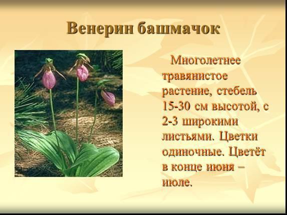 Написать доклад о растениях 3 класс как написать ходатайство образец украина