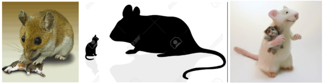 Мышки - кошки