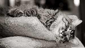 рассказ про домашнего кота на английском языке