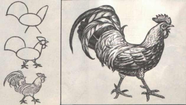 Рисунок петуха в чёрно-белом