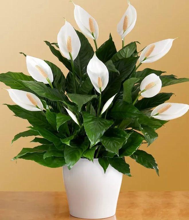 Цветы в горшках мужские