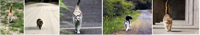 коты, идущие по ровной поверхности (по дороге)