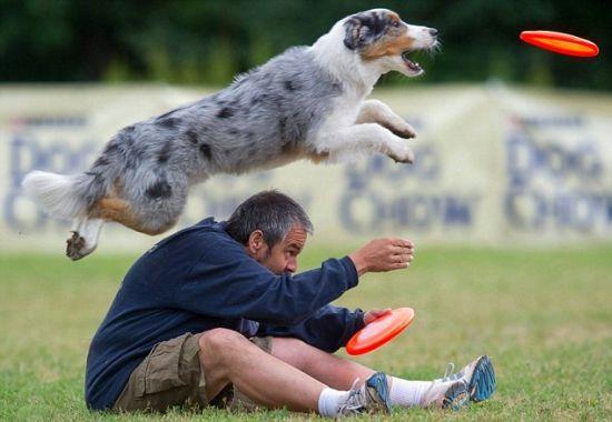 фрицби диск для собак