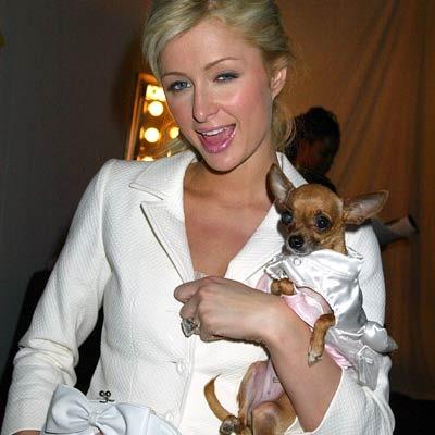 Парис Хилтон с собачками