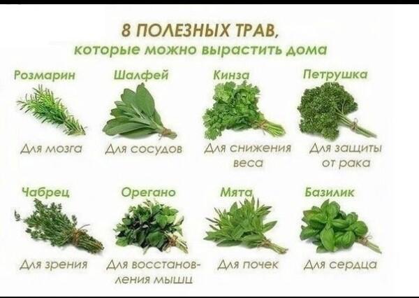 Вышеуказанные растения не только можно но и нужно выращивать для здоровья