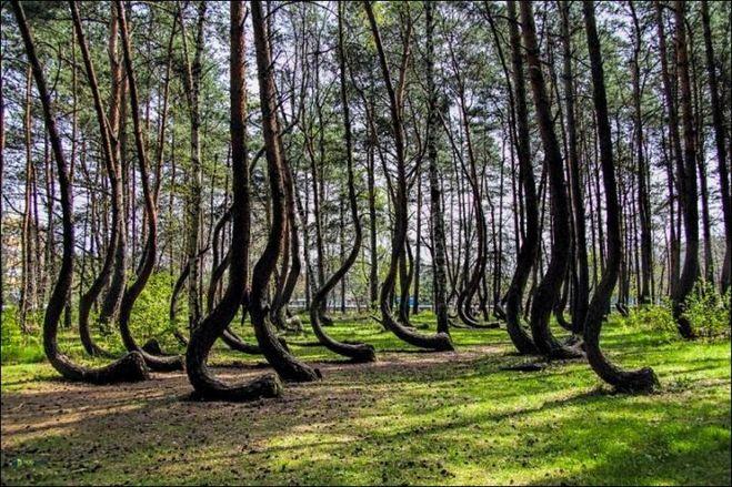 изогнутые деревья