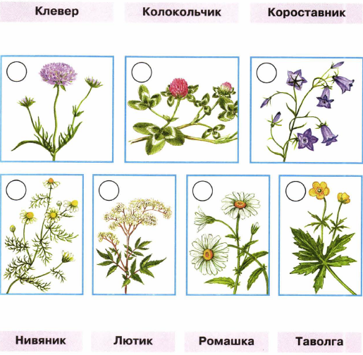 в картинках окружающий мир растения