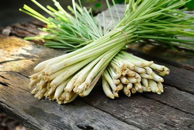 lemon grass Lemongrass is a perennial in zones 8 to 11 it has aromatic, grass-like leaves with a lemon flavor use the leaves and stems in asian dishes learn more.