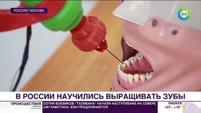 выращивать зубы