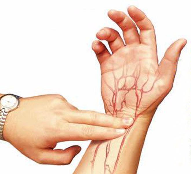 пульс лучевой артерии