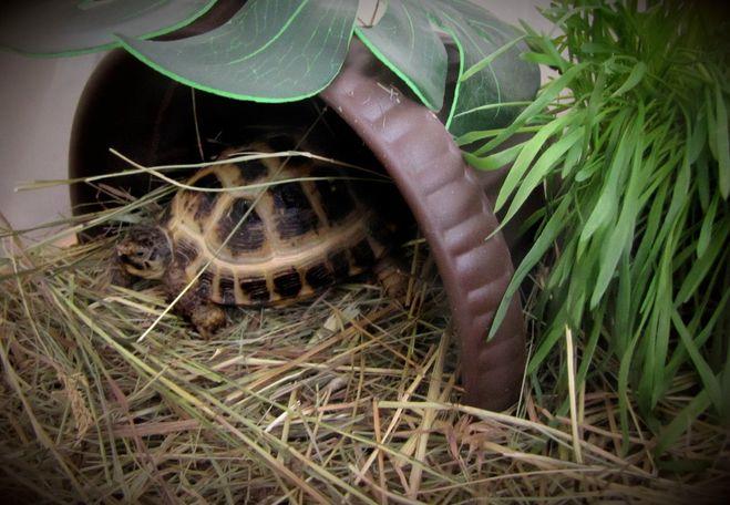 Как сделать черепахе домик фото 781